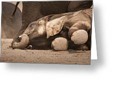 Young Elephant Lying Down Greeting Card