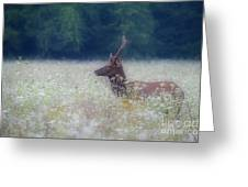 Young Elk In The Smokies. Greeting Card