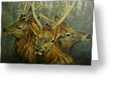 Young Elk Trio- Wapiti Greeting Card