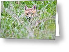 Young Fox Kit Hiding In Tall Grass Greeting Card