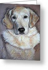 Young Golden Retriever Greeting Card