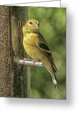Young Goldfinch Greeting Card