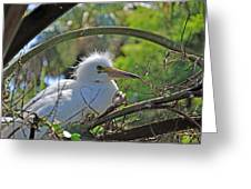 Young Great Egret Greeting Card