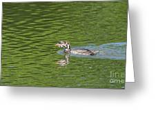 Young Grebe Greeting Card
