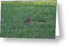 Young Groundhog Greeting Card