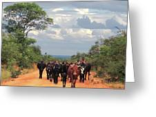 Young Herders, Zambia Greeting Card