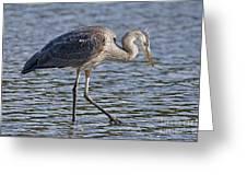 Young Heron Greeting Card