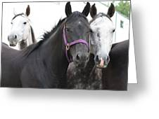 Young Horses Greeting Card
