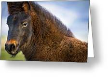 Young Icelandic Horse Greeting Card