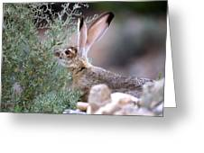 Young Jack Rabbit Snaking Greeting Card