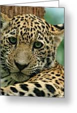 Young Jaguar Greeting Card by Sandy Keeton