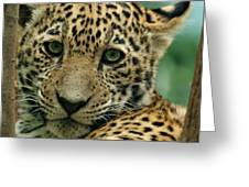 Young Jaguar Greeting Card by Sandy Keeton