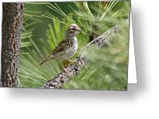 Young Lark Sparrow 2 Greeting Card