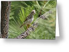 Young Lark Sparrow 3 Greeting Card