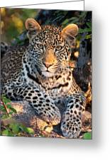 Young Leopard Greeting Card