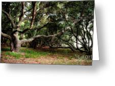 Young Live Oaks Greeting Card