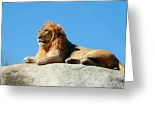 Young Male Lion Reclining On A Rock Greeting Card