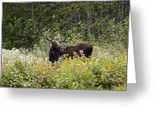Young Male Moose Greeting Card
