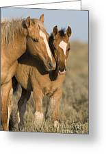 Young Mustangs Playing Greeting Card