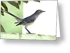 Young Northern Mockingbird Greeting Card