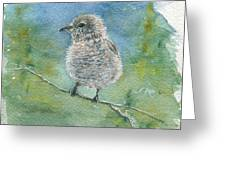 Young Northern Shrike Greeting Card