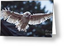 Young Owl Greeting Card