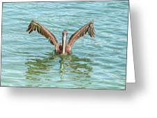 Young Pelican 0087 Greeting Card