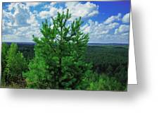 Young Pine Greeting Card