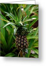 Young Pineapple Greeting Card