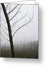 Young Ploplars Greeting Card