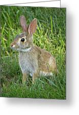 Young Rabbit Greeting Card