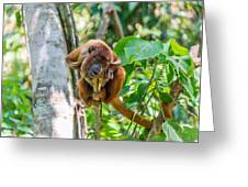 Young Red Howler Monkey Greeting Card
