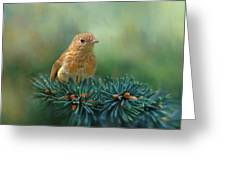 Young Robin On Pine Tree Greeting Card