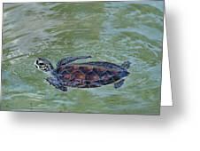 Young Sea Turtle Greeting Card