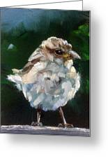 Young Sparrow Greeting Card
