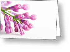 Young Spring Lilac Flowers Blooming Greeting Card