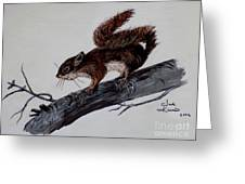 Young Squirrel Greeting Card