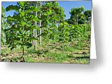Young Teak Plantation Greeting Card