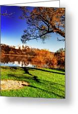 Young Trees Greeting Card