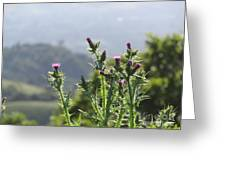 Young Thistles Greeting Card