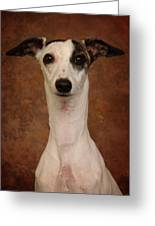 Young Whippet Greeting Card