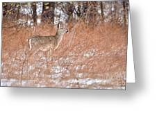 Young White-tailed Deer In The Snow Greeting Card