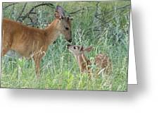 Young White-tailed Deer Say Hello Greeting Card