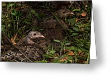 Young Wild Turkeys Greeting Card