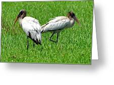 Young Wood Storks 2 Greeting Card