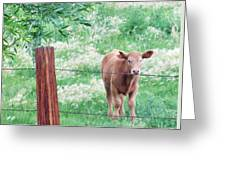 Youngster Greeting Card