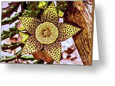 Your A Star In My Eyes Greeting Card
