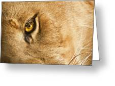 Your Lion Eye Greeting Card by Carolyn Marshall