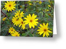 Youre A Daisy If You Do Greeting Card