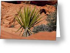 Yucca Beauty Greeting Card